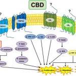 Κανναβιδιόλη (CBD) και Γλοιοβλαστώματα, Dr Allan Frankel 1