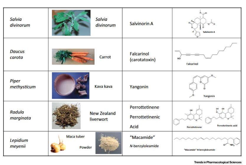 Φυτά και Ενδοκανναβινοειδές Σύστημα 3