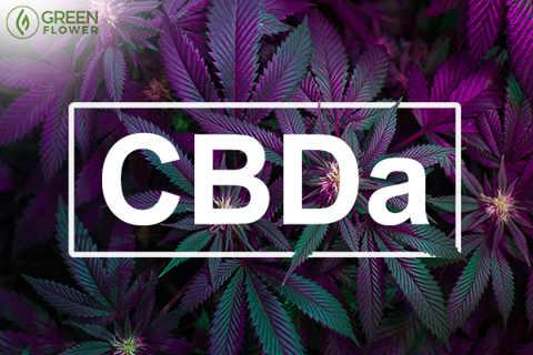 Τι είναι το CBDa και τι κάνει 22