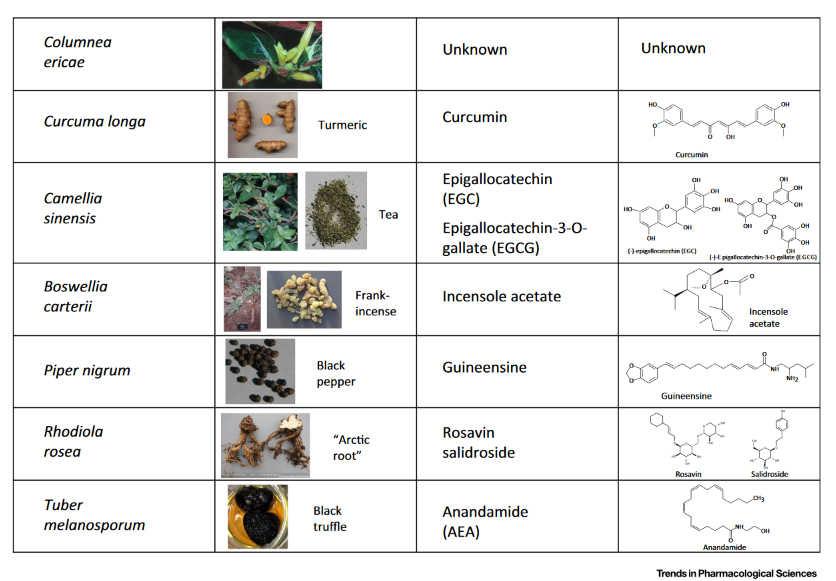 Φυτά και Ενδοκανναβινοειδές Σύστημα 8